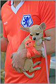 Holland football team supporter with dog and orange lion