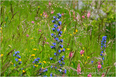 Wild diversity of spring meadow